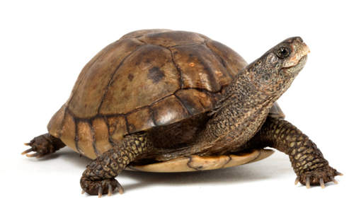 Schildpad op zoektocht. wijsheidmanagement
